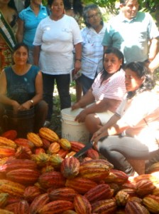 Peruvian women are responsible for cutting open the cocoa pods and removing the cocoa beans; generally the men of the community do the harvest.
