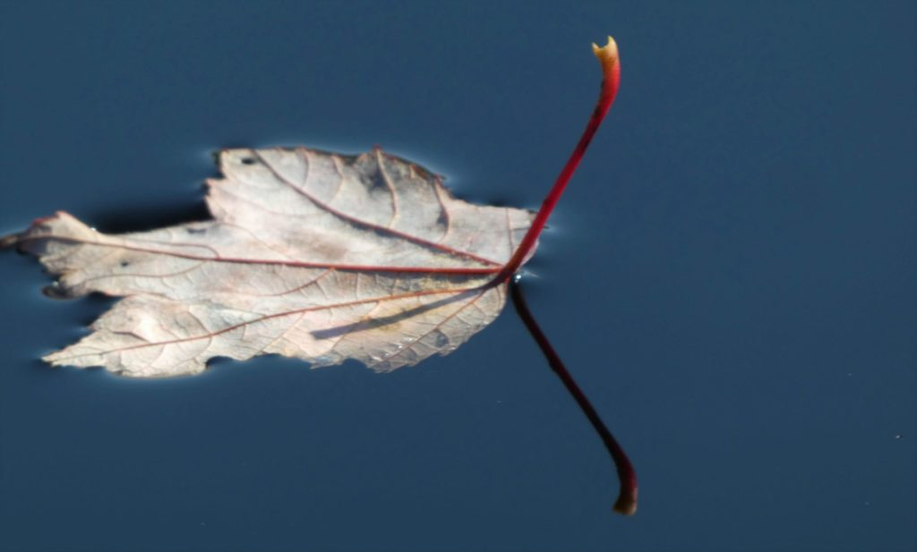 The simplicity of leaves